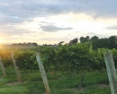 Wineries & More in Yadkin Valley, NC