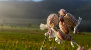 Women Who Growl