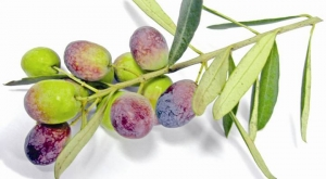 Confessions of an Olive Lover